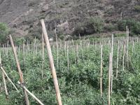 marconsult-fiens-agro-alimentos-iqcert-servicios-certiicaciones-agrarias-agro-img (1)