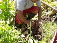 marconsult-fiens-agro-alimentos-iqcert-servicios-certiicaciones-agrarias-agro-img (3)