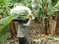 marconsult-fiens-agro-alimentos-iqcert-servicios-certiicaciones-agrarias-agro-img (4)