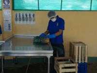 marconsult-fiens-agro-alimentos-iqcert-servicios-certiicaciones-agrarias-agro-img (5)
